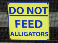 feedalligators_web